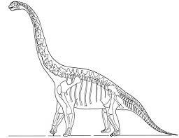 skeleton brachiosaurus dinosaurus coloring color luna