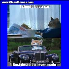 Cat Meme I Should Buy A Boat - i should buy a car clean memes the best the most online
