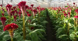 the beginner u0027s guide to bulb gardening proflowers blog