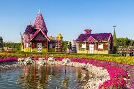 dubai miracle garden opens today dubai miracle garden dubai