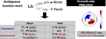 verb pattern prevent ambiguous function words do not prevent 18 month olds from building