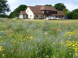 using wild flowers in gardens wild flower lawns u0026 meadows buy