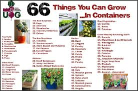 how to grow a vegetable garden from kitchen scraps seg2011 com