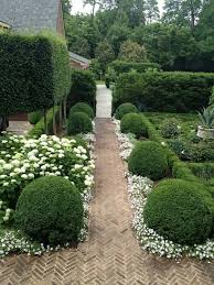 the garden you need boxwood and white flower hedges green