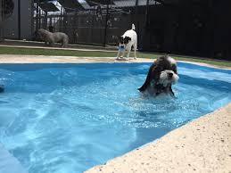 animal house jacksonville nc pet lodging doggy day care u0026 spa