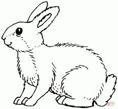 get this rabbit coloring pages printable for kids wy71r