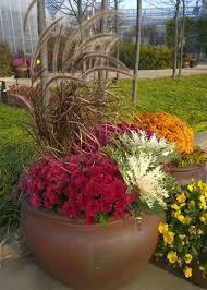 how to select ornamental grasses for your garden garden club