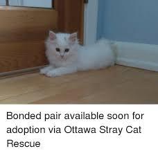 Cat Soon Meme - bonded pair available soon for adoption via ottawa stray cat rescue