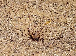 Ants In Bathtub The Phoenix Agents Non Toxic Ant Bait