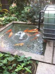 How To Make A Koi Pond In Your Backyard Building A Pond Aquarium Biofilter Dustin Bajer
