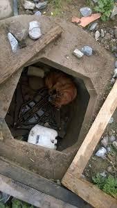 boxer dog quebec 25 best ideas about boxer dog rescue on pinterest dog best