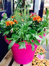 autumn u0026 winter pots and containers powerscourt garden pavilion