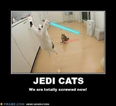 Star Wars Cat Meme - look at these 35 star wars memes you will star wars meme meme