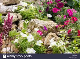 plants for rock gardens alpine rock garden plant stock photos u0026 alpine rock garden plant