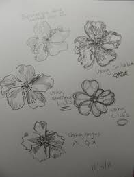 nature sketch challenge day two artful explorations in nature