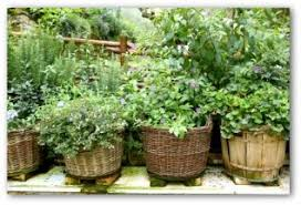 Container Vegetable Gardening Ideas Container Vegetable Garden Plans And Ideas