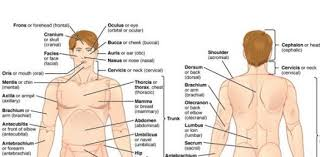Human Anatomy And Physiology Terminology Anatomical Terminology Quiz Proprofs Quiz
