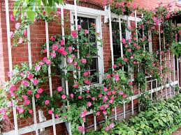 What To Use For Climbing Plants - best 25 rose trellis ideas on pinterest trellis ideas trellis