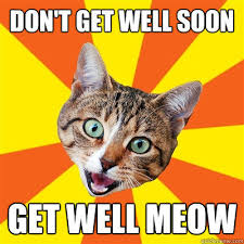 don t get well soon get well meow bad advice cat quickmeme