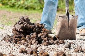 nine fascinating facts about horse manure