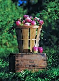 Local Pumpkin Farms In Nj by Home Demarest Farms Orchard Farm Store U0026 Garden Center