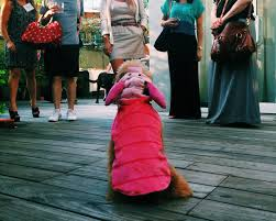 partners halloween costumes dog halloween costumes are the shih tzu huffpost