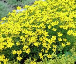 25 types of flowers to plant for summer summer flowers plant with
