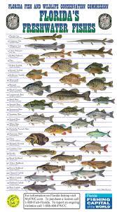 freshwater fish freshwater fish google search camping fishing pinterest