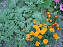go organic to shrink your gardening budget u2014 veggie gardening tips