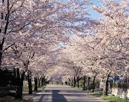 aliexpress com buy diy diamond painting spring cherry flowers