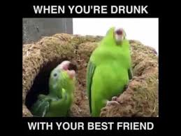 Parrot Meme - drunk parrot youtube