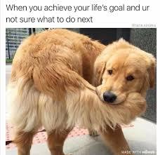 Orange Dog Meme - dog memes home facebook
