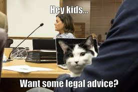 Lawyer Cat Meme - caption contest 150 enter for a chance to win 50 contest