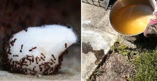 de fourmis dans la cuisine chassez les fourmis de la maison une fois pour toutes sans