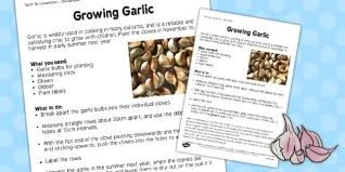 garlic worksheet growing garlic worksheet grow