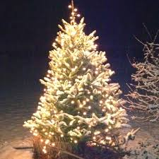 how to put lights on a tree outside 124 best christmas lights images on pinterest merry christmas love