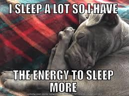 Sick Puppy Meme - randomocity puppy tales let sleeping dogs lie