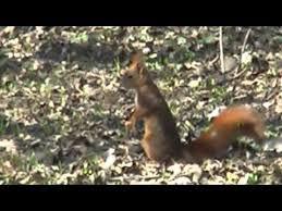 delle codroipo scoiattolo rosso parco delle risorgive codroipo ud