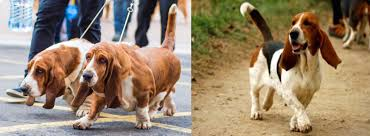 boxer dog crufts 2015 pedigree dogs exposed the blog help me i u0027m melting