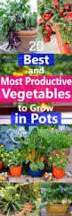 best u0026 most productive vegetables to grow in pots gardens