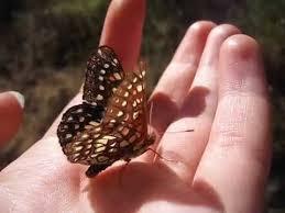 butterfly sweat my