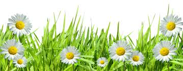 large transparent grass with dew and daisies home décor