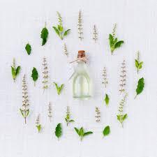 feuille de cuisine images gratuites blanc feuille fleur arôme modèle aliments