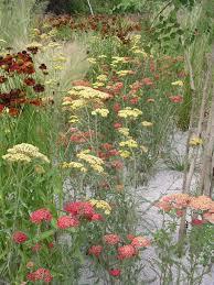 kiesgarten steine gräser bunte blumen mein schöner garten