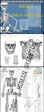 Anatomy And Physiology Skeletal System Test Best 25 Human Skeleton Labeled Ideas On Pinterest Human