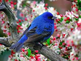 birds images absolutely beautiful bird on a cherry blossom tree hd