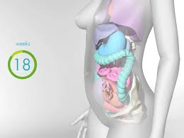 how your body changes during pregnancy video babycenter