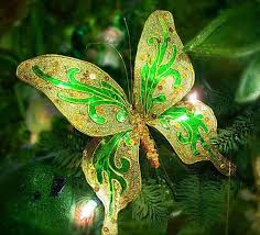62 best beautiful butterfly images on