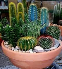 best 25 mini cactus garden ideas on pinterest dish garden
