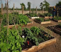 vegetable garden boxes 16 appealing garden box ideas digital